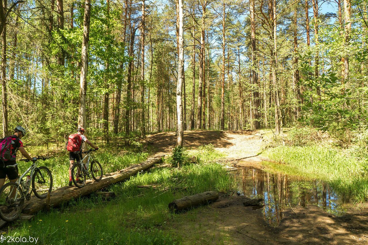 Лес около Берозовки